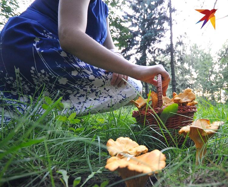 """Лисички наши прадеды называли """"еврейским грибом"""" и считали их кушаньем малопривлекательным."""