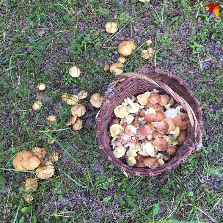 Богатый урожай в июле совсем не говорит о том, что в сентябре грибов не будет