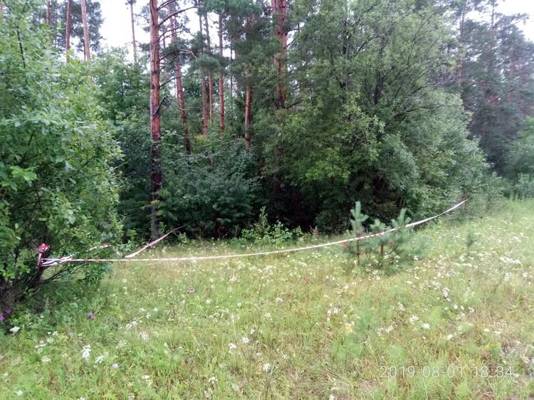 В этом лесу обнаружили тело мальчика. Фото: пресс-служба СУ СК РФ по УР
