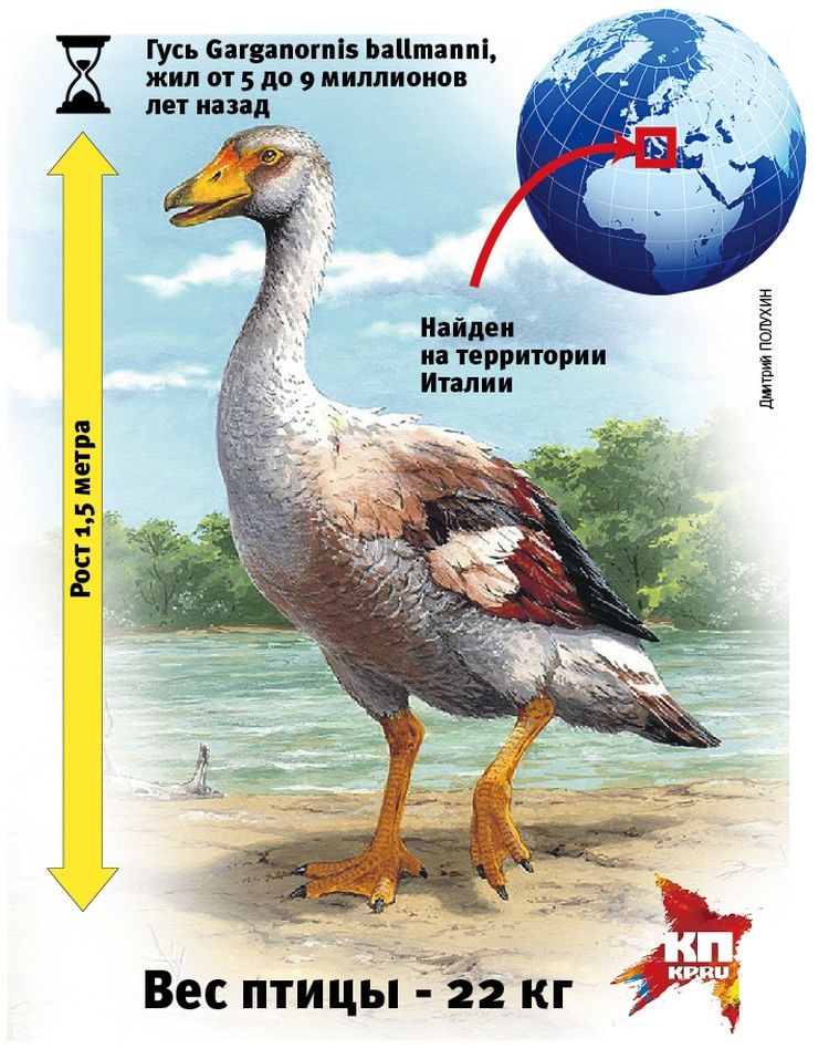 Доисторический гусь был тяжелее доисторического попугая.