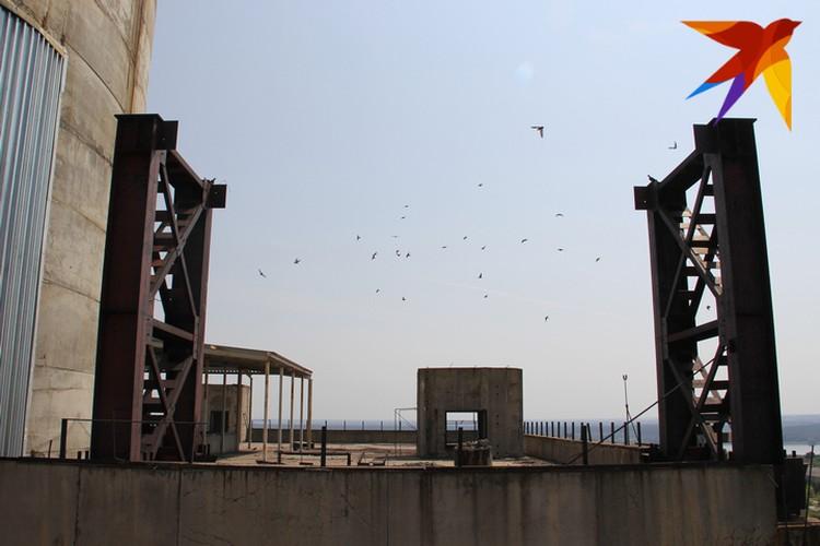 Крыши ВАСТ облюбовали птицы.