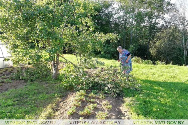 Лесной житель похозяйничал на приусадебном участке пенсионерки. Фото: УВД Витебского облисполкома.