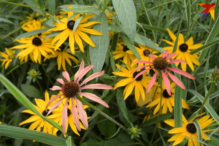 Многие наклоняются и нюхают цветочки