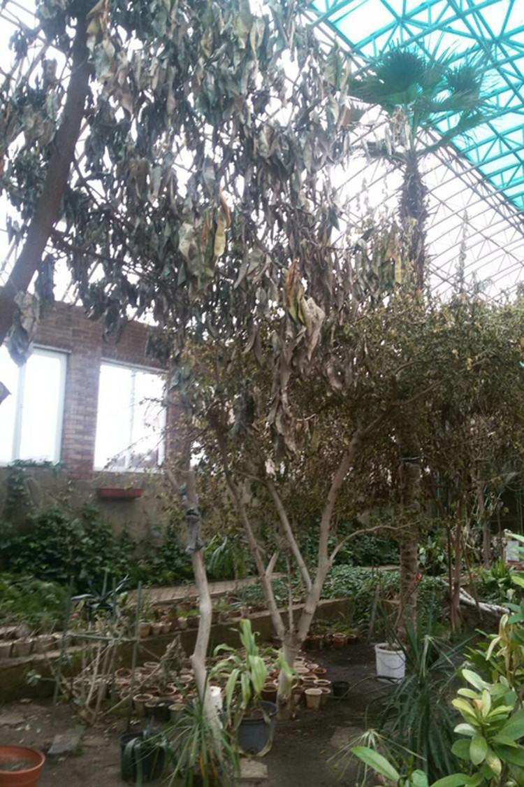Вот так выглядела оранжерея, пока там не появилась Ольга Викторовна. Фото: личный архив Ольги Викторовны