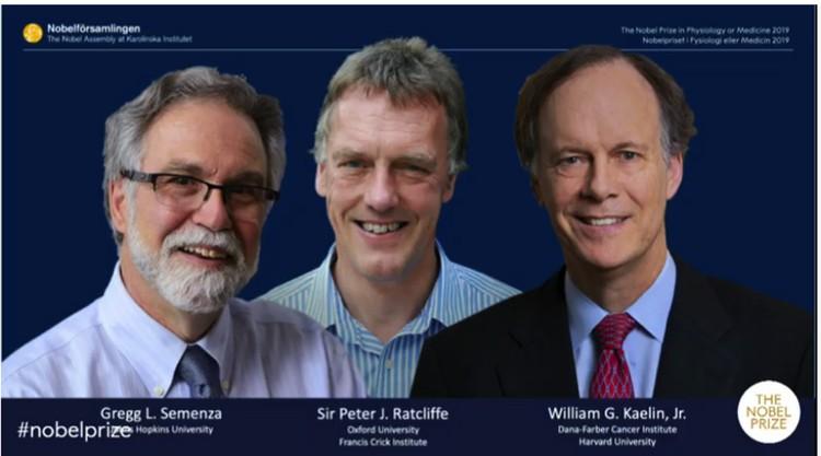 Лауреаты Нобелевской премии в области медицины и физиологии за 2019 года.
