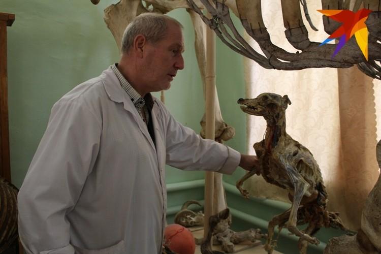 Для сохранения размеров и объемов внутренних органов, ученый наполняет их монтажной пеной.