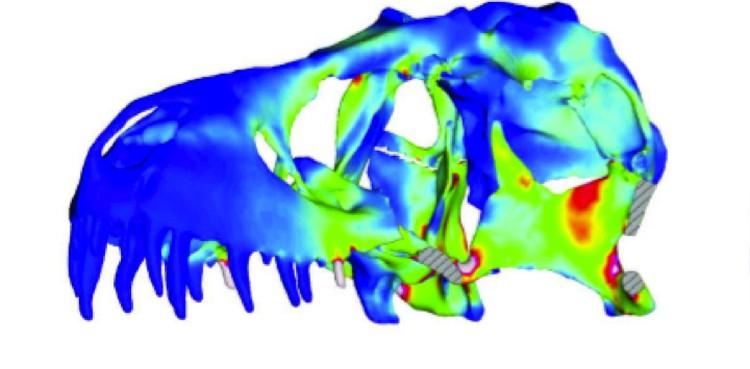 Распределение нагрузок в черепе тираннозавра.