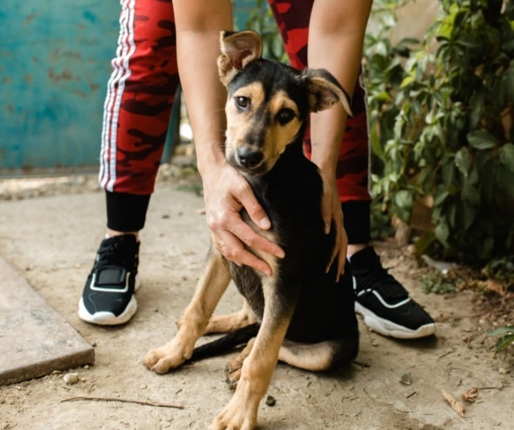 Пес надеется найти себе хозяев. Фото: Ольга БУРЛАКОВА
