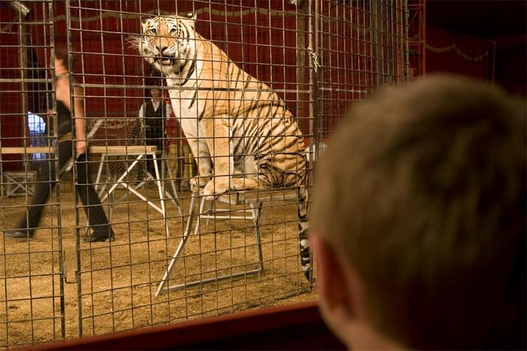 Зоозащитники празднуют победу: в Калифорнии запретили цирковые шоу с животными.