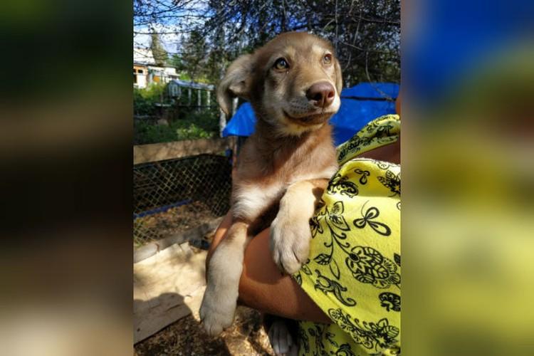 Каштанке тоже повезло - ее, видимо, не заметили, когда избивали других щенят. Фото: предоставлено волонтерами.