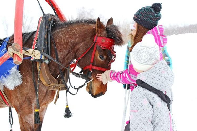 Встречаться с лошадьми ребята смогут круглый год Фото: mustang-sakh.ru