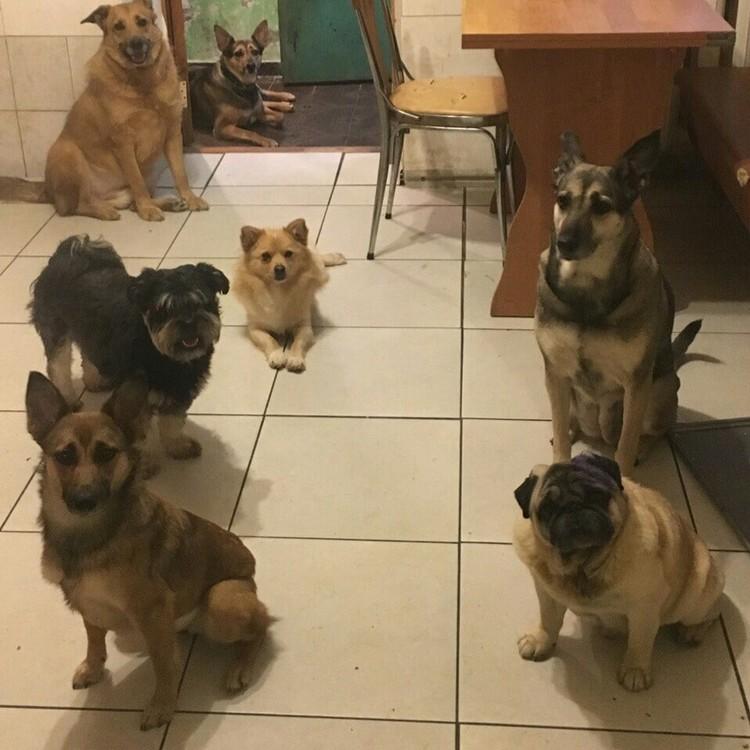 Инвалид стал главарем целой стаи собак. Фото: семейный архив