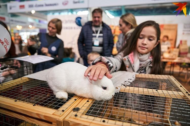 Кролики пользовались успехом у детей.