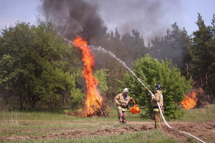 Фото: Министерство природных ресурсов и экологии РО
