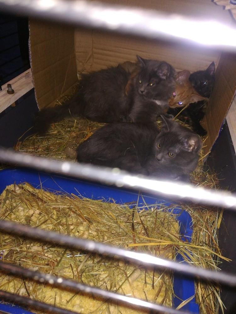 Кошки сидели в пяти клетках. Фото: Дай лапу