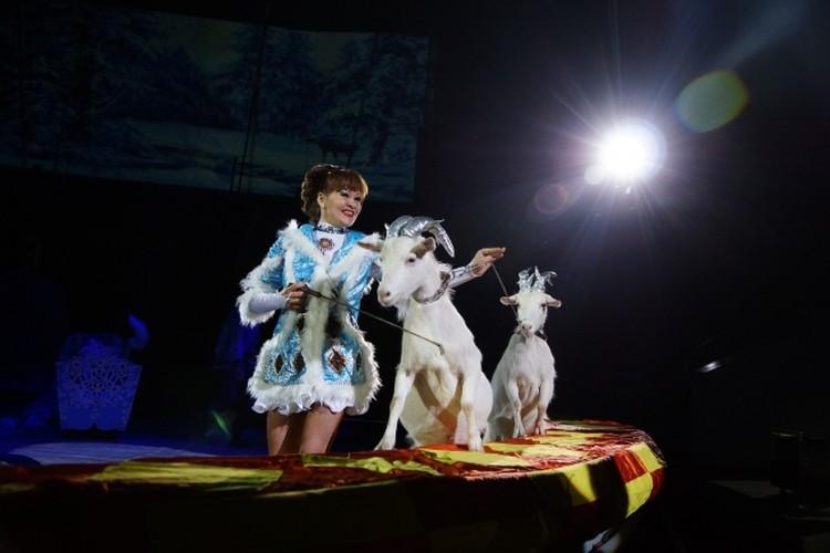 Екатерина Коренькова в программе «Нубийские львы».