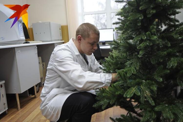 Всего в екатеринбургскую лабораторию привезли семь таких елок от разных российских производителей.