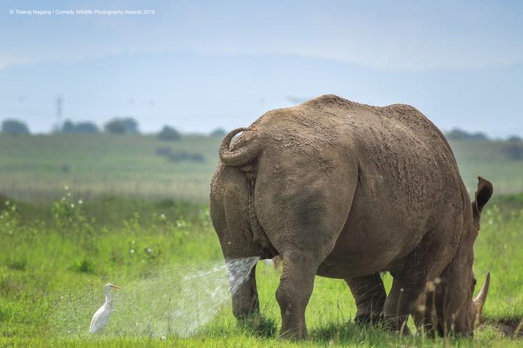 Фото: Tilakraj Nagaraj/The Comedy Wildlife Photography Awards 2019