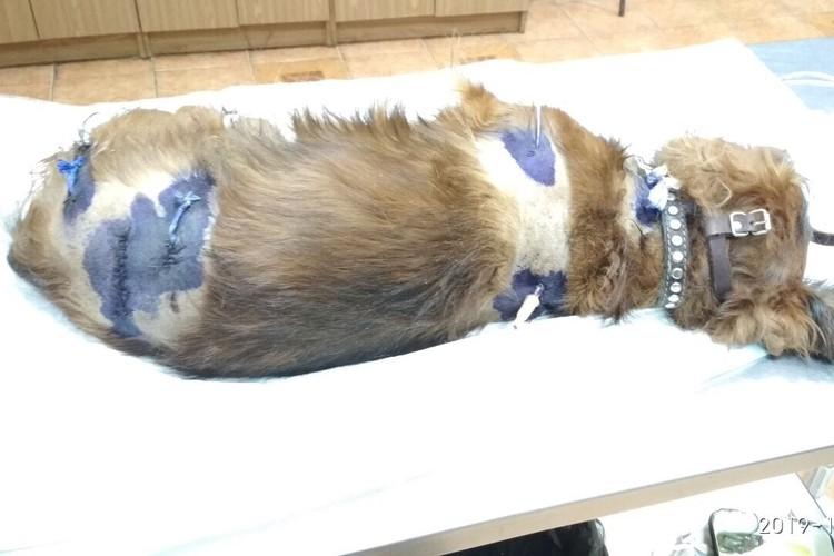 Ветеринарам понадобилось четыре часа на обработку ран.