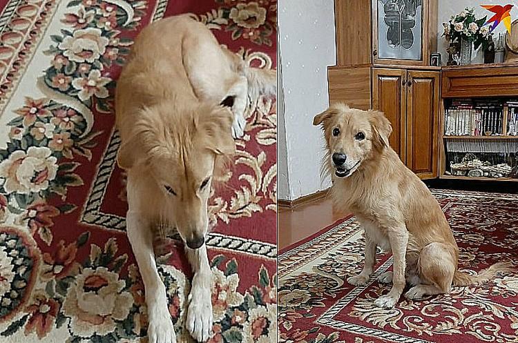 Собаке 3,5 года, теперь она живет в новой семье