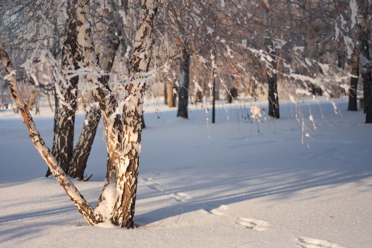 Снег — как лакмус: теперь мы знаем, что на набережную иногда наведываются зайцы, судя по следам.