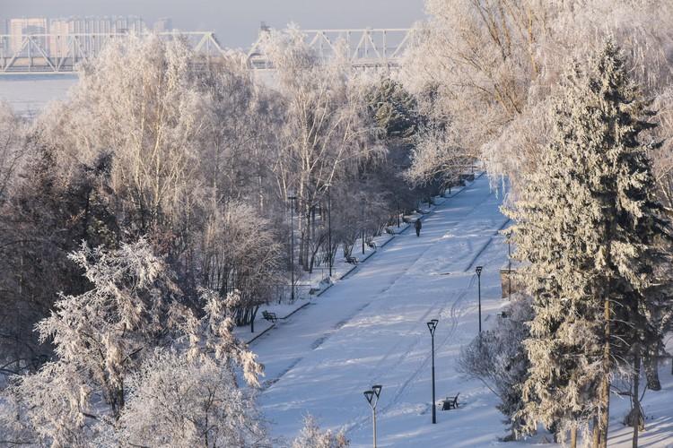 Деревья в инее можно наблюдать вдоль реки — из-за высокой влажности на ветках и стволах образуется изморозь.