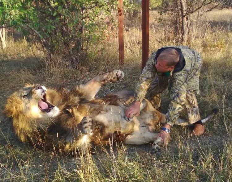 У каждого львадолжен быть паспорт и история болезни