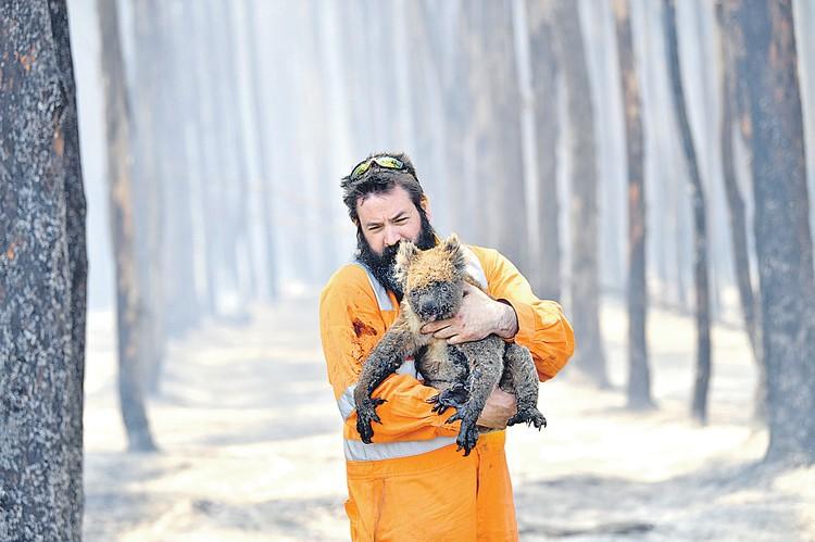 Коал спасали как могли. И, конечно, кенгуру и других зверюшек. Фото: EPA