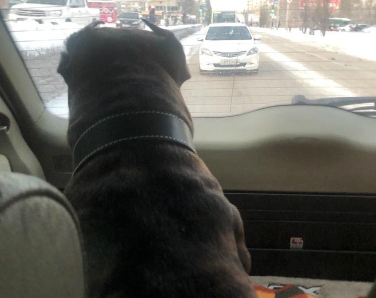 Выяснилось, что Герда любит кататься на авто. Фото: Светлана Андреева