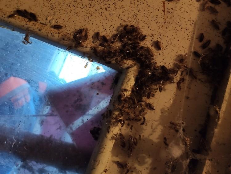 В квартире расплодились тараканы. Фото: Курчатовский РОСП
