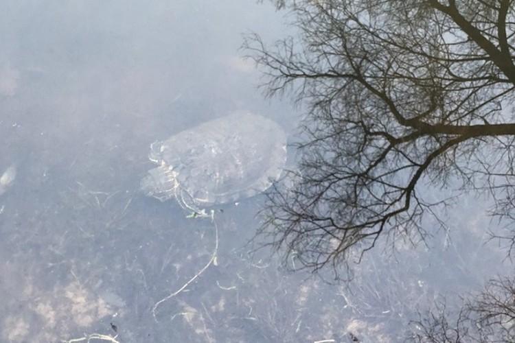 Женщины достали черепаху из-подо льда, разбив его ногами. ФОТО: Личный архив героев публикации