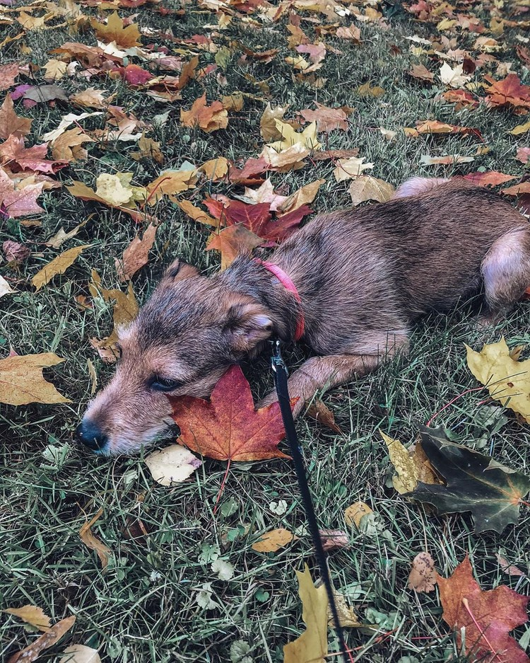 Осенняя хандра у Хлои