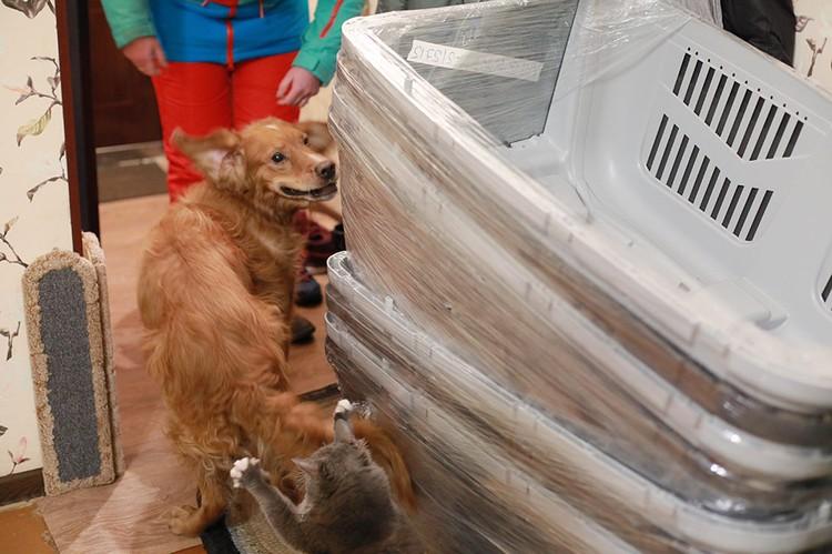 В этих больших контейнерах собак перевезут в другую страну