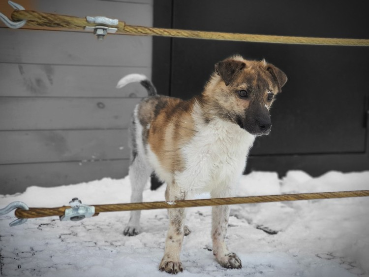 """Прошло полтора месяца, щенка выходили, подлечили Фото: АНО """"Желтая бирка"""""""