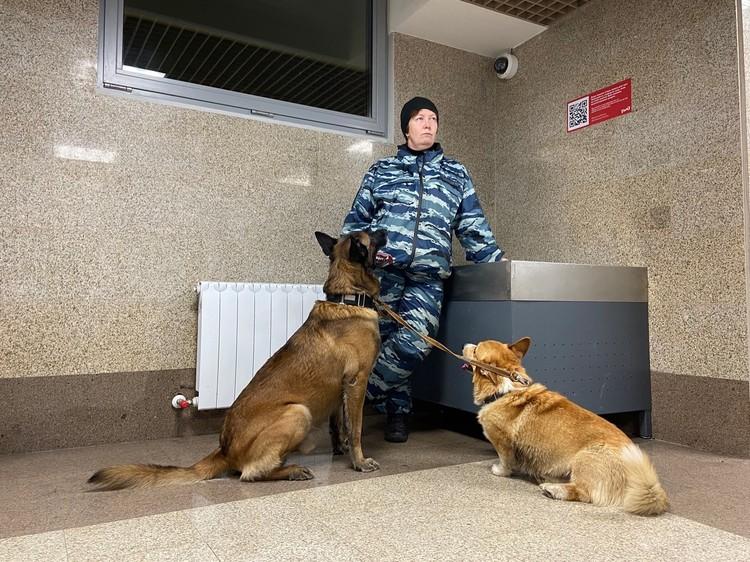 На службе корж несколько раз делает обходы по вокзалу, выезжает на обыски, в нарколаборатории или подозрительные квартиры.