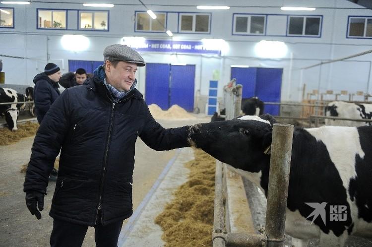 Каждой корове необходим свой рацион, который определяют зоотехники