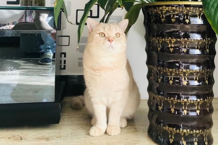 Пока в Маньчжурии карантин, котик сидит в съемной квартире с хозяином. Фото: предоставлено героем публикации.