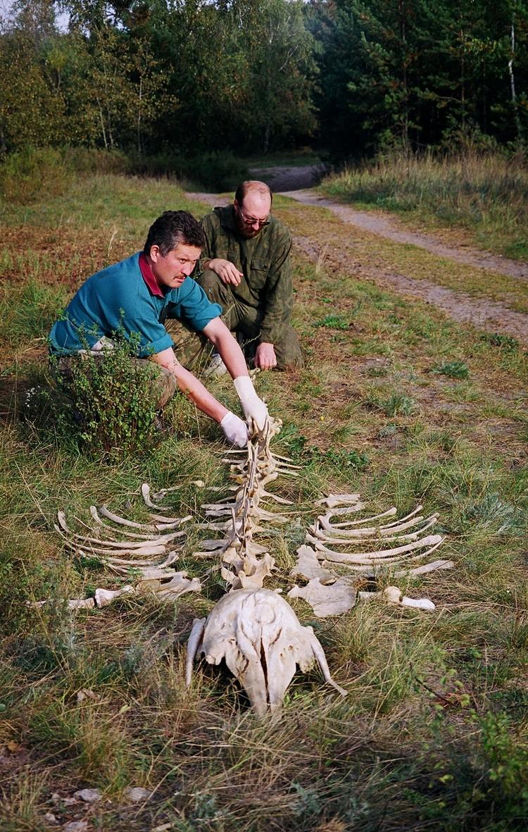 Белуха на Андреевском озере. Фото из архива Павла Ситникова