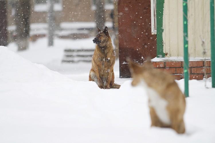 На бездомных собак тратят больше, чем на детей, считает мэр Якутска.