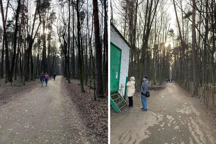 В Тимирязевском лесу стар и млад.