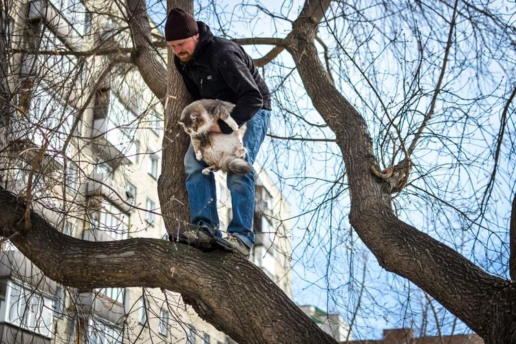 Чаще всего на высоте коты чувствуют себя в безопасности. И переживать надо не за них, а за их хозяев, которые боятся потерять животное.