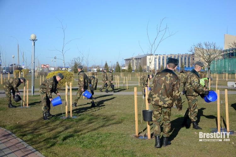 В Бресте этой весной появилось много молодых деревьев - им нужен уход. Фото: brestcity.com