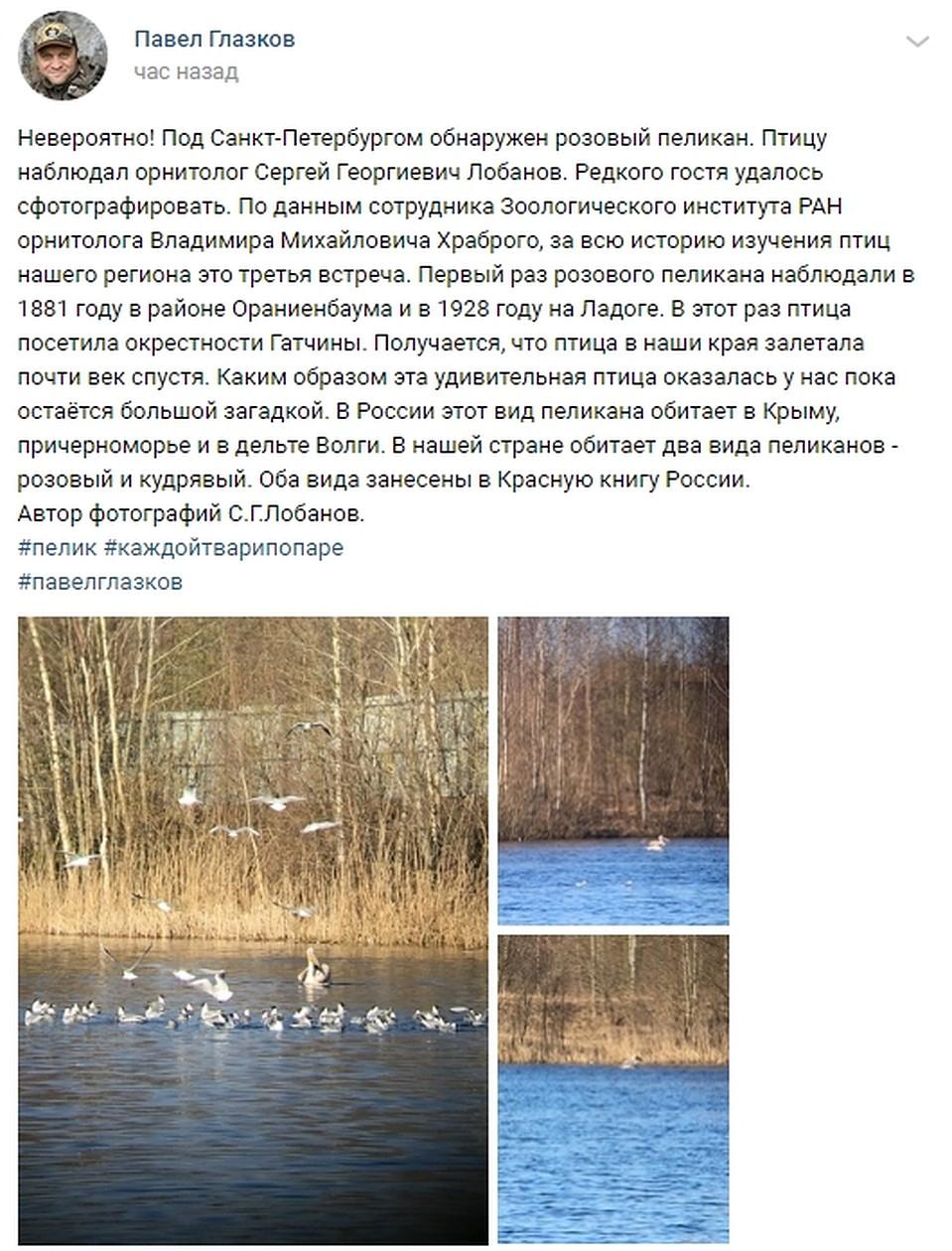 Обо всем рассказал биолог Павел Глазков. Фото: vk.com/id2730611