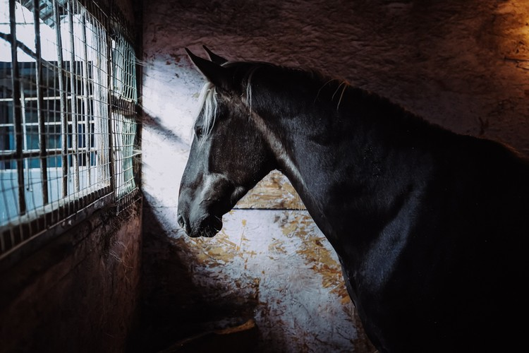 Без учеников лошади грустят