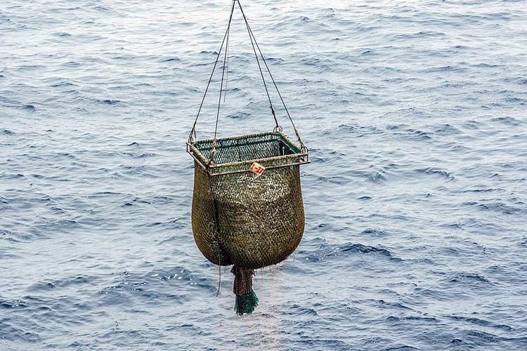 Перегрузка рыбы на борт плавбазы