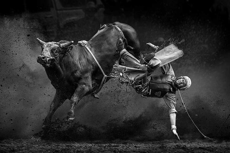 «Вон из седла» - эпизод австралийского родео на быках поймал Тони Лоу.