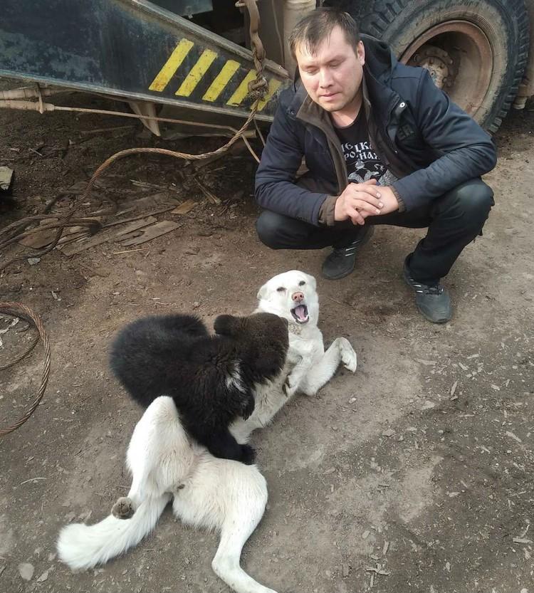 Мишка обожает играть с собаками. Фото: личный архив Владимира Норина.