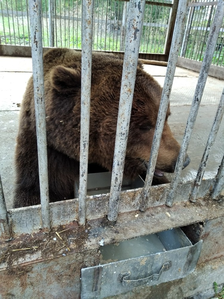 За судьбой животного сейчас следят общественники и зоозащитники. Фото: Гражданский патруль