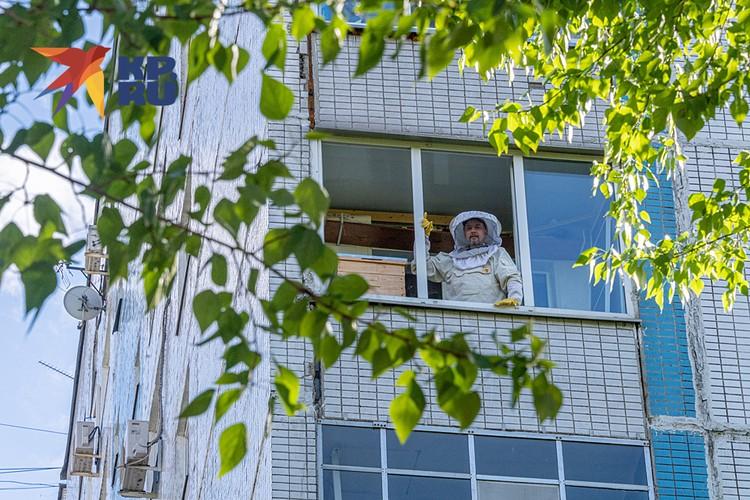 Пасека находится в обычной панельной двенадцатиэтажке недалеко от метро «Сходненская»