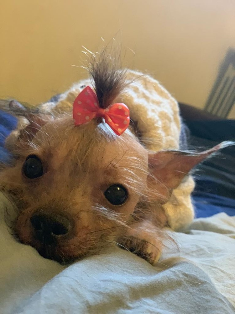 Когда-то у собаки была совсем другая жизнь. Фото: страница Вконтакте реабилитационного центра бездомных животных города Шахты «Святобор».